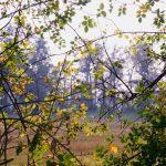 Morgenspaziergang – die Natur heilt!